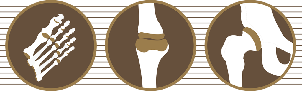 bone icons of a foot, knee and hip